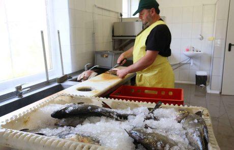 Gworek przetwórnia ryb